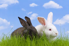 Easter-rabbit Royalty Free Stock Photos
