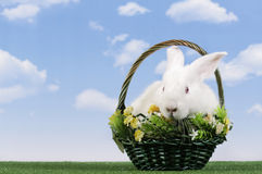 Easter-rabbit Stock Image