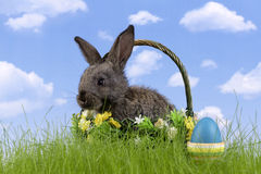 Easter-rabbit Stock Images
