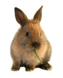 Easter rabbit Stock Image