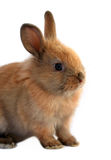 Easter rabbit. Cute easter rabbit sitting on white background Royalty Free Stock Image