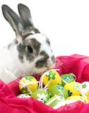 Easter Rabbit. Real life rabbit with painted easter eggs Royalty Free Stock Image
