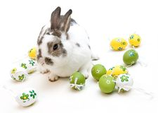 Easter Rabbit. Real life rabbit with painted easter eggs Royalty Free Stock Images