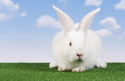 Easter-rabbit Royalty Free Stock Photos