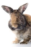 Easter rabbit. Isolated on white with smooth shadow Stock Photos
