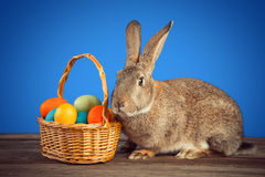 Easter rabbit with a basket Royalty Free Stock Image