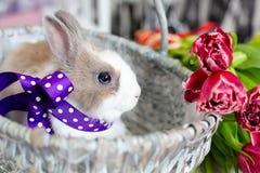 Easter rabbit Royalty Free Stock Photo