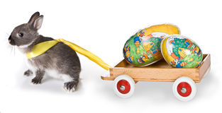 Easter rabbit with cart Royalty Free Stock Image