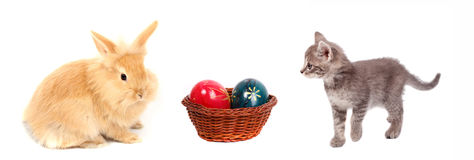 Easter rabbit and cat Royalty Free Stock Photography
