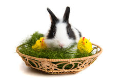 Easter rabbit with chicks and grass in basket Stock Images