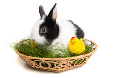 Easter rabbit with chicks and grass in basket Stock Photo