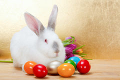 Easter rabbit with colorful eggs Royalty Free Stock Images