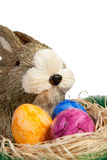 Easter Rabbit with colourful Easter Eggs Royalty Free Stock Photography