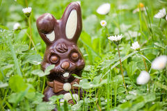 Easter rabbit in daisies Stock Image