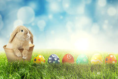 Easter rabbit with Easter eggs on grass. Picture of Easter rabbit with row of colorful Easter eggs on the green grass Stock Photography