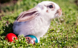 Easter rabbit and Easter eggs. Easter rabbit and painted Easter eggs around him Royalty Free Stock Photos