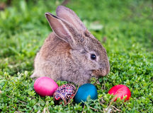 Easter rabbit and Easter eggs. Easter rabbit and painted Easter eggs around him Stock Images