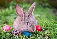 Easter rabbit and Easter eggs. Easter rabbit and painted Easter eggs around him Royalty Free Stock Photo