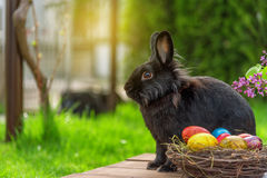 Easter rabbit and easter eggs Royalty Free Stock Images