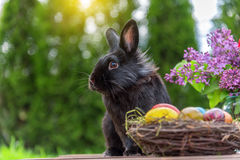 Easter rabbit and easter eggs Stock Images