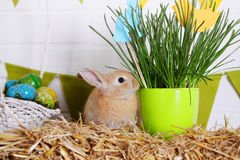 Easter rabbit eating grass Royalty Free Stock Photography