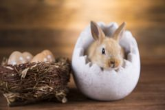 Easter rabbit in egg shells.  royalty free stock photos