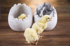 Easter rabbit in egg shells. Easter rabbit in egg shells stock photo