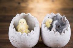Easter rabbit in egg shells. Easter rabbit in egg shells royalty free stock photography