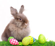 Easter Rabbit with eggs royalty free stock photo