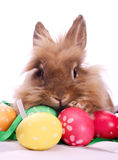 Easter rabbit and eggs Royalty Free Stock Photos