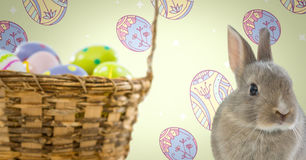 Easter Rabbit with eggs basket in front of pattern. Digital composite of Easter Rabbit with eggs basket in front of pattern Royalty Free Stock Images