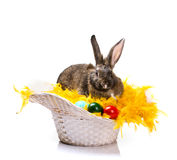Easter rabbit and eggs Royalty Free Stock Photo