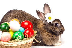 Easter rabbit, eggs and camomile Royalty Free Stock Photography