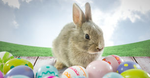 Easter rabbit with eggs in front of blue sky Stock Photo