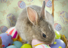 Easter rabbit on eggs in front of pattern. Digital composite of Easter rabbit on eggs in front of pattern Royalty Free Stock Photos
