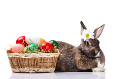 Easter rabbit with eggs Stock Image