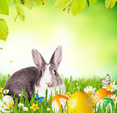 Easter rabbit in grass Stock Photo