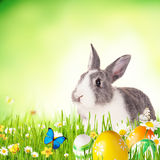 Easter rabbit in grass Royalty Free Stock Photos