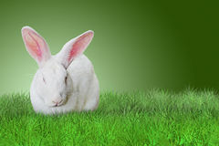 Easter rabbit on grass on green background. White Easter rabbit on grass on green background Royalty Free Stock Image