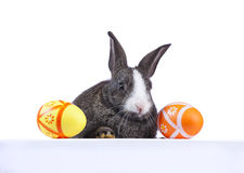 Easter rabbit holding a banner Stock Photography