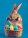 Easter rabbit holds a basket Stock Photos