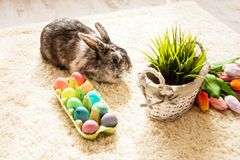 Easter rabbit in home Royalty Free Stock Photography