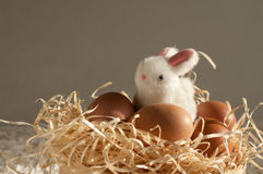 Easter rabbit inside a sieve full of easter eggs on rustic wood. En royalty free stock images