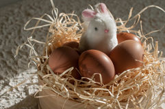 Easter rabbit inside a sieve full of easter eggs on rustic wood Royalty Free Stock Image