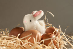 Easter rabbit inside a sieve full of easter eggs on rustic wood Stock Image