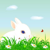 Easter rabbit on a meadow. Vector of a easter little rabbit on a meadow Stock Images