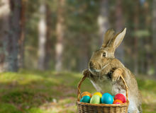 Easter rabbit on nature Stock Photos