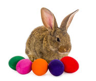 Easter rabbit with painted eggs Royalty Free Stock Photos