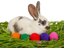 Easter rabbit with painted eggs sitting in grass Royalty Free Stock Image