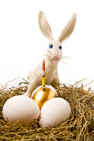 The easter rabbit paints egg. The white rabbit paints egg in gold colour in a nest Stock Images